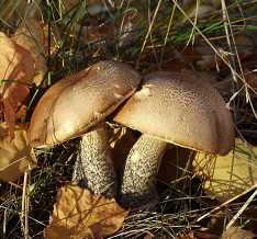 Как искать грибы