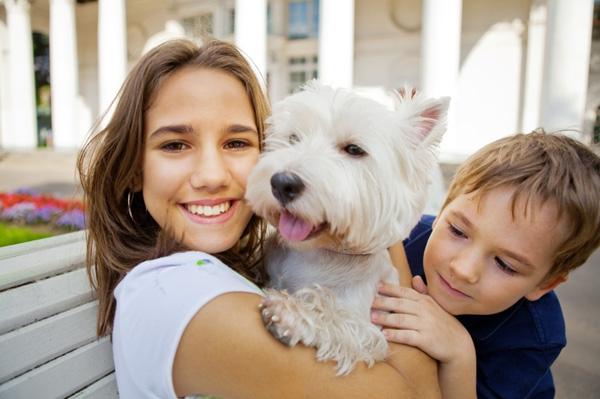 «Гамавит» для собак: инструкция, дозировка. Как колоть «Гамавит» собаке