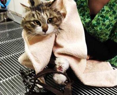 Ветеринарная клиника Рязани для любимых питомцев