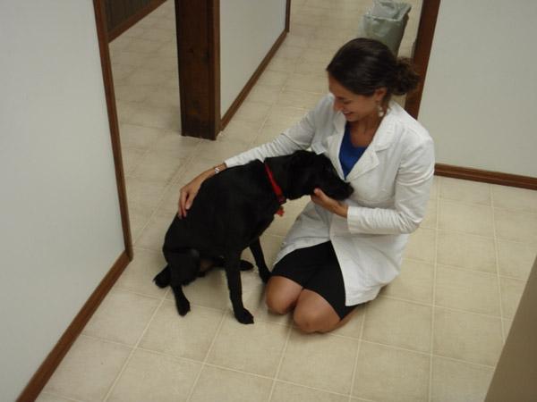 Хабаровск, ветеринарная клиника: как выбрать, на что обратить внимание, как сделать своего болеющего питомца счастливым