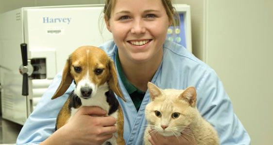 Медицинская помощь животным в Санкт-Петербурге. Клиника Сотниковых