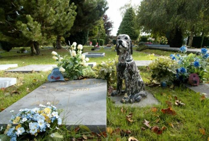 Кладбище домашних животных. Где похоронить домашнее животное? Ритуальные услуги для животных