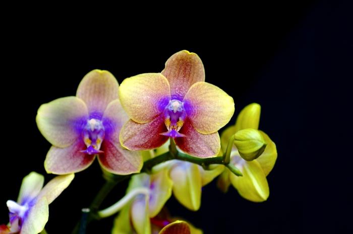 Кашпо для орхидей, условия содержания растений