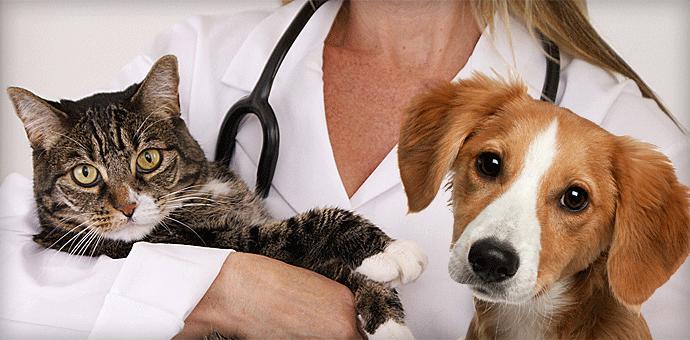 Ветеринарная клиника в Твери: ветклиника