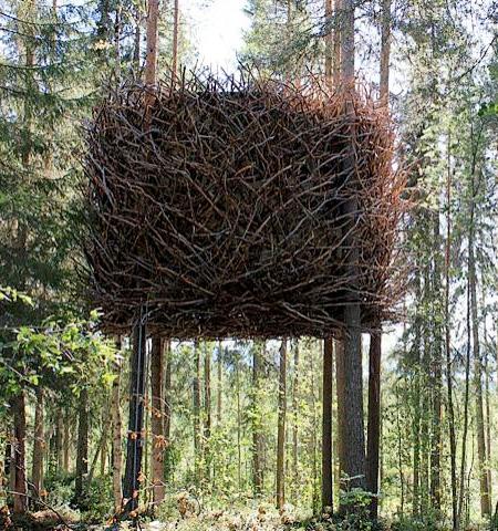 Дом-гнездо